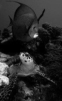 Turtle with Angel B&W